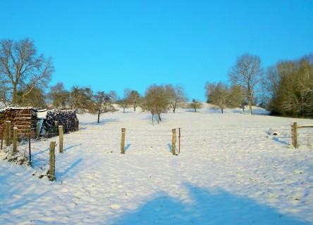 La neige des Vosges